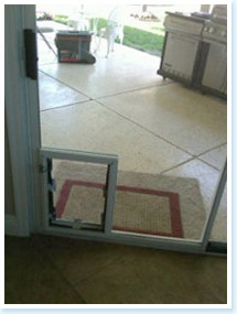 in glass dog door