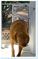 screen pet door