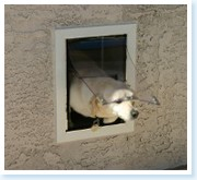 Purrfect pet doors dog and cat door installation - Cat door for hollow core door ...